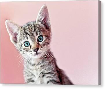 Kitty Canvas Print by Nevena Uzurov