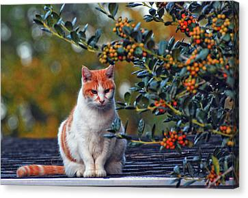 Canvas Print featuring the photograph Kitty On The Roof by Margaret Palmer