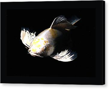 Koi Coming To The Light Canvas Print by Don Mann