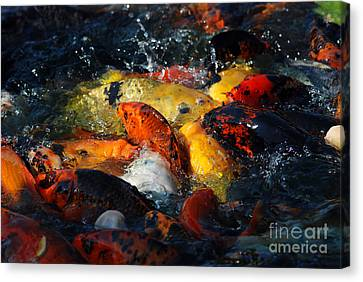 Canvas Print featuring the photograph Koi Fish by Eva Kaufman