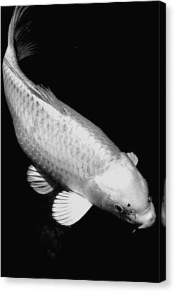 Koi In Monochrome Canvas Print by Don Mann