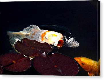 Koi In The Lillies Canvas Print by Don Mann