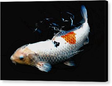 Koi Rising Canvas Print by Don Mann
