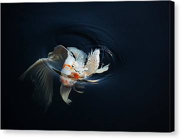 Koi Rising In The Moonlight Canvas Print by Don Mann