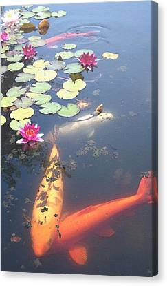 Koi Canvas Print by Steve Huang