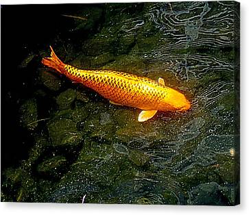 Koi Story One C Canvas Print by Randall Weidner