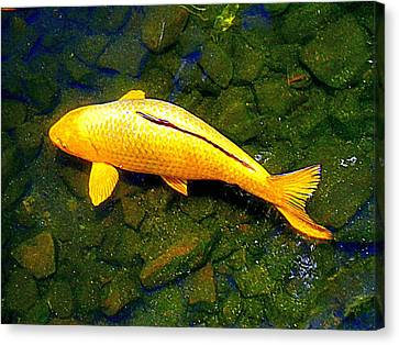 Koi Story One E Canvas Print by Randall Weidner