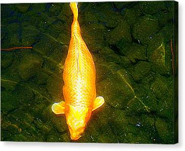 Koi Story One H Canvas Print by Randall Weidner