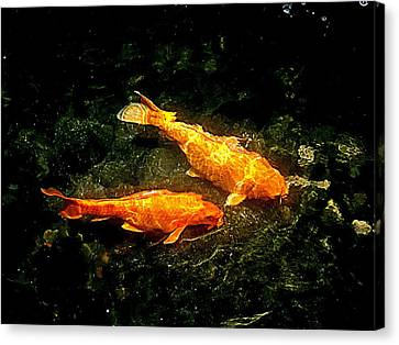 Koi Story Two B Canvas Print by Randall Weidner