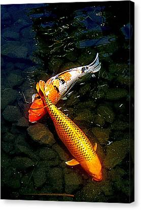 Koi Story Two C Canvas Print by Randall Weidner