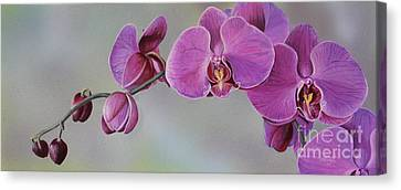 Kristin's Orchid  Canvas Print by Margit Sampogna