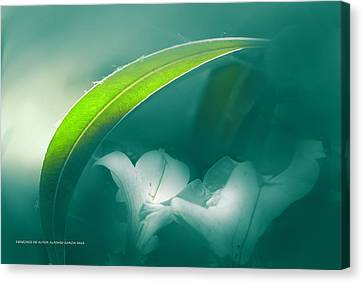 La Sombrilla Canvas Print