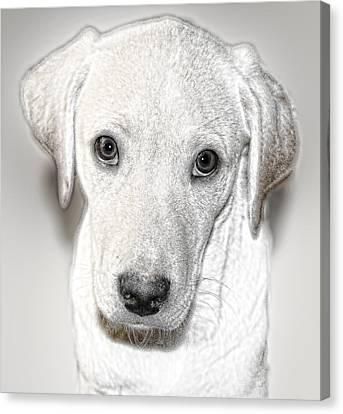 Lab Puppy Bw Sketch Canvas Print by Linda Phelps