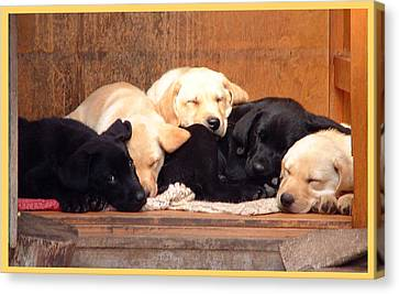 Canvas Print featuring the photograph Labrador Puppies Sleeping by Richard James Digance
