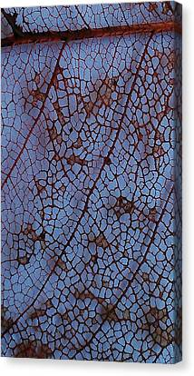 Lace Leaf 1 Canvas Print