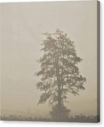 Lace Canvas Print by Odd Jeppesen