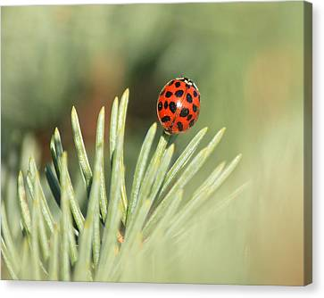 Canvas Print featuring the photograph Lady Beetle On A Needle by Penny Meyers