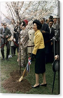 Lady Bird Johnson Planting A Tree Canvas Print by Everett