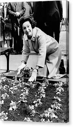 Lady Bird Johnson Planting Pansies Canvas Print by Everett
