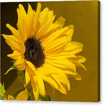 Lady Sunflower Canvas Print by MaryJane Armstrong