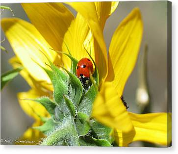 Canvas Print featuring the photograph Ladybug by Mitch Shindelbower