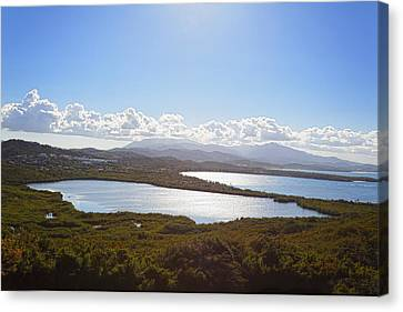 Mangrove Forest Canvas Print - Laguna Grande  by George Oze