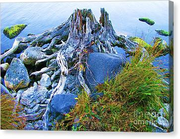Canvas Print featuring the photograph Lake Shore Weathered Stump by Michele Penner