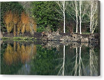 Dogwood Lake Canvas Print - Lakeside Plants by Dr Keith Wheeler