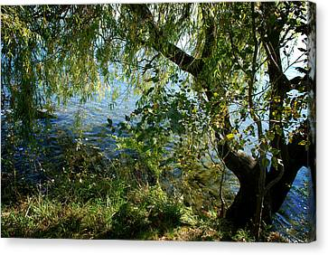 Lakeside Tree Canvas Print by Kathleen Grace