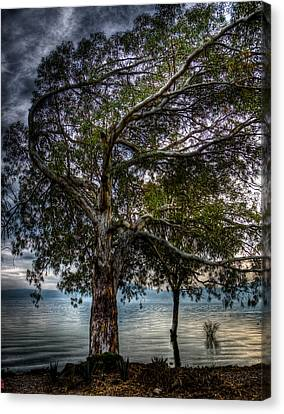 Lakeside Tree Canvas Print by Tommy Farnsworth