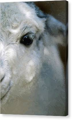 Lama Canvas Print by Design Windmill