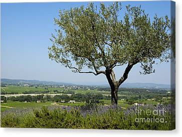 Landscape Of Provence. France Canvas Print by Bernard Jaubert