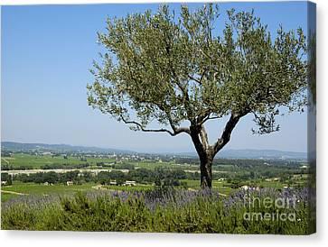 Landscape Of Provence. France Canvas Print