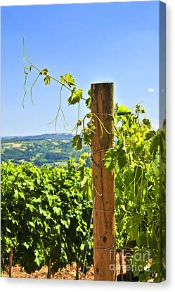 Landscape With Vineyard Canvas Print by Elena Elisseeva