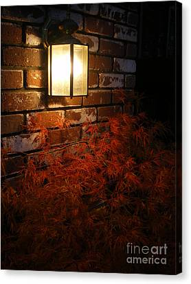Lantern Light Maple Canvas Print
