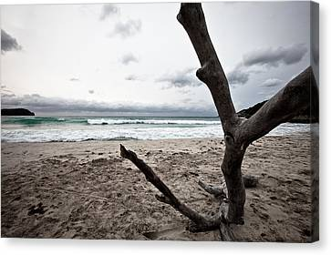 Large Piece Of Driftwood On A Beach On An Overcast Day Canvas Print by Anya Brewley schultheiss
