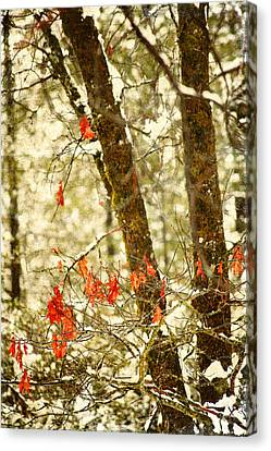 Last Leaves Clinging Canvas Print by Bonnie Bruno