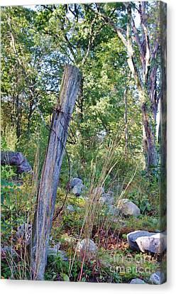 Last Post Standing At Beaver Lake Canvas Print