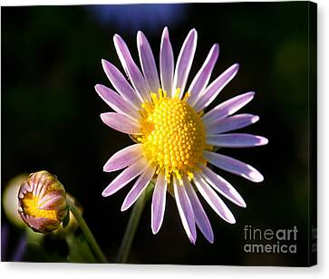 Canvas Print featuring the photograph Last Ray Of Sun by Jim Moore