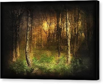 Warm Canvas Print - Last Rays by Svetlana Sewell