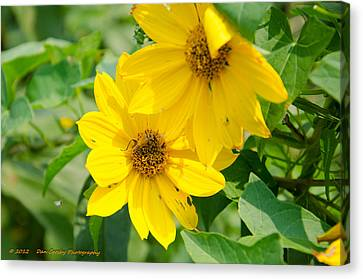 Late Summer Blooms Canvas Print by Dan Crosby
