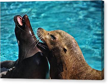 Laughing Seals Canvas Print by Karol Livote