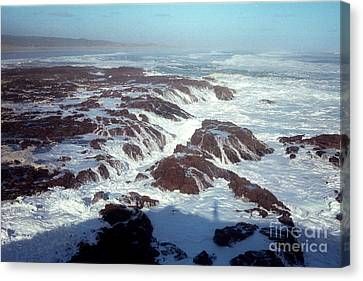 Canvas Print featuring the photograph Lava Rock 90 Mile Beach by Mark Dodd