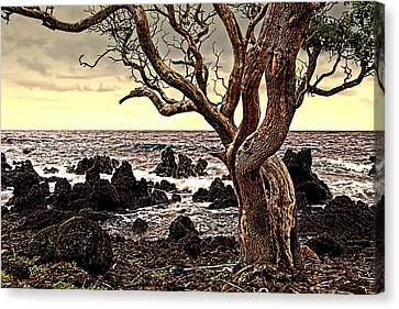 Lava Rocks And The Sea Canvas Print