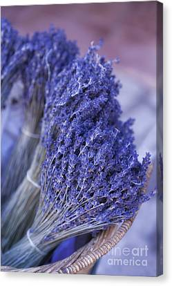 Lavender Bunches In Provence Canvas Print by Paul Grand