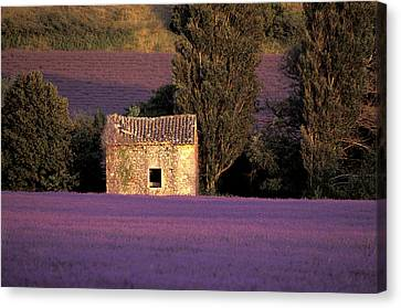 Lavender Fields Canvas Print by Christian Heeb