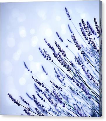 Close Focus Floral Canvas Print - Lavender Flower Field Background by Anna Om