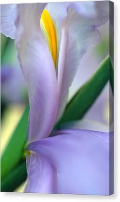 Lavender Iris Canvas Print by Kathy Yates