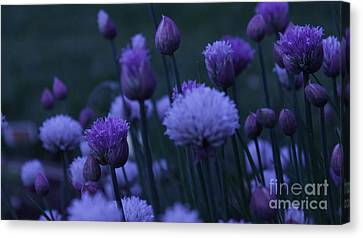 Lavender Twilight Canvas Print by Iman Trek