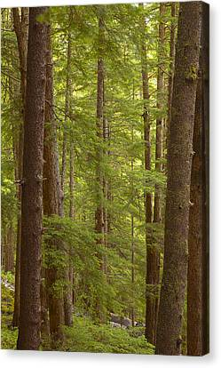 Prints Of Alaska Canvas Print - Layers Of Green by Tim Grams